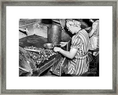 Oyster Industry Shuckers 1948 Framed Print