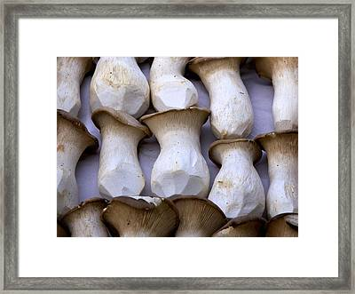 Oyster Mushrooms Framed Print