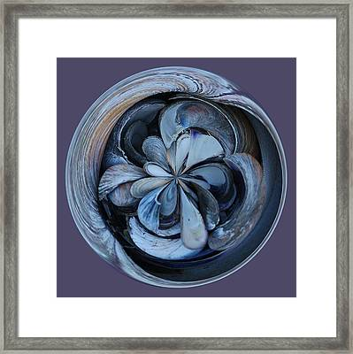 Oyster Shell Orb Framed Print by Paulette Thomas