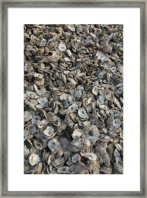 Oyster Shells After Processing Framed Print by Jim West