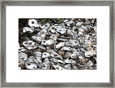Oyster Shells Framed Print by John Rizzuto