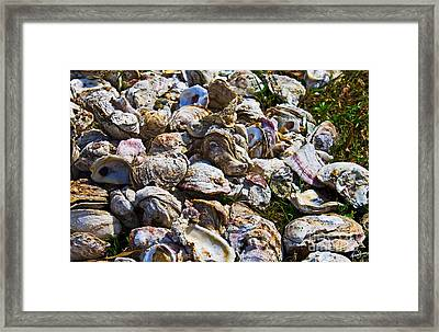 Oysters 01 Framed Print