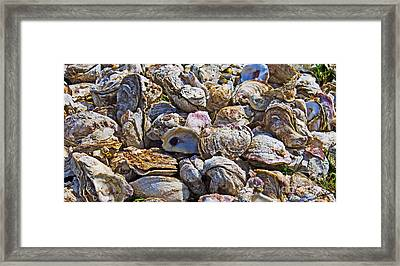 Oysters 02 Framed Print