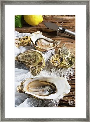 Oysters On Ice (ostrea Edulis Framed Print
