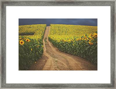 Oz Framed Print by Carrie Ann Grippo-Pike