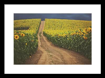 Sunflower Framed Prints