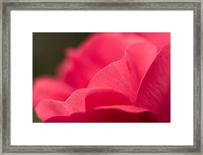 P Is For Pink Framed Print