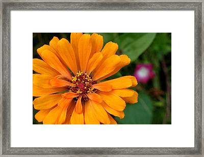 Pac-man As A Flower Framed Print by Artist Orange