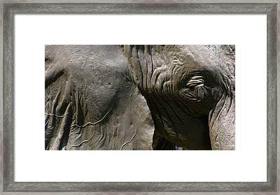 Framed Print featuring the photograph Pachyderm by Jennifer Wheatley Wolf