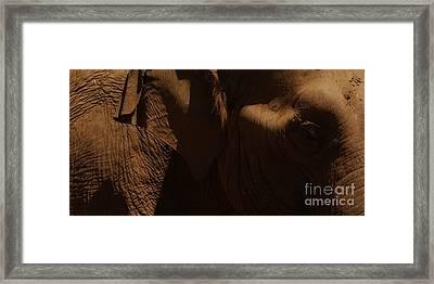 Pachyderm Panorama Framed Print by Anna Lisa Yoder