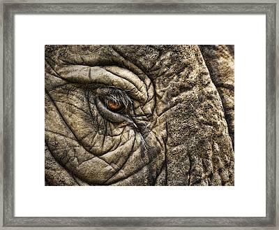 Pachyderm Skin Framed Print by Daniel Hagerman