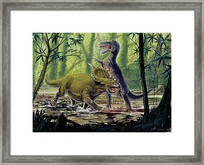 Pachyrhinosaurus And Theropod Fighting Framed Print by Deagostini/uig