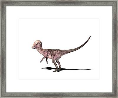 Pachysaurus Dinosaur Framed Print