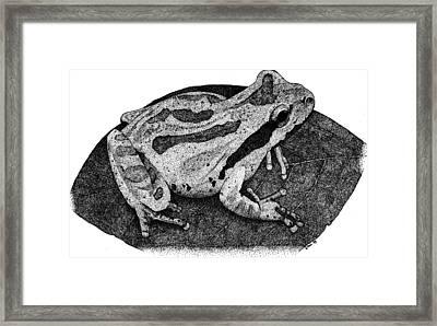 Pacific Chorus Frog Framed Print