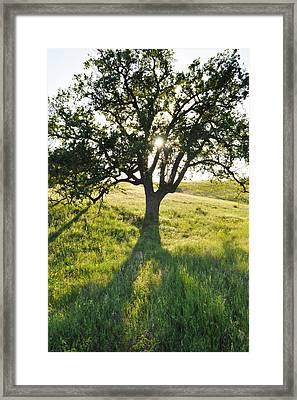 Framed Print featuring the photograph Pacific Coast Oak Malibu Creek by Kyle Hanson