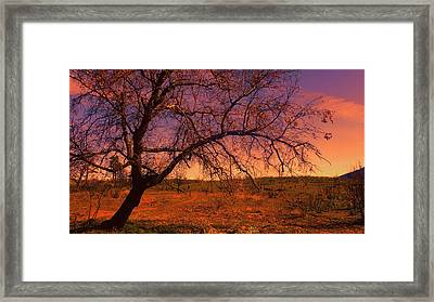 Pacific Crest Trail  Framed Print