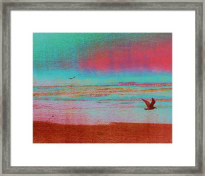 Pacific Flight Framed Print by Bonnie Bruno