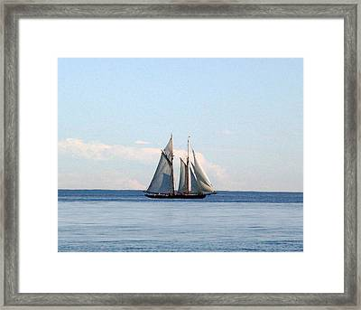 Pacific Grace Framed Print