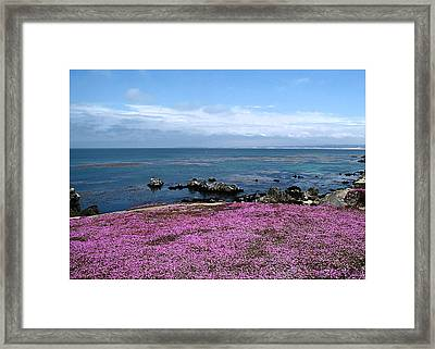 Framed Print featuring the photograph Pacific Grove California by Joyce Dickens