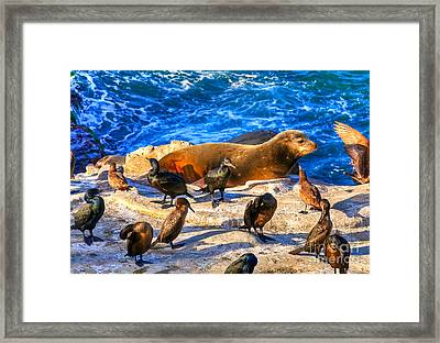 Framed Print featuring the photograph Pacific Harbor Seal by Jim Carrell