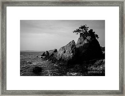 Pacific Island Tree Framed Print by Dean Harte