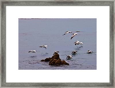 Pacific Landing Framed Print by Melinda Ledsome