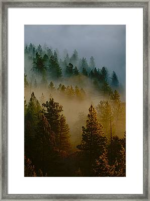 Framed Print featuring the photograph Pacific Northwest Morning Mist by Ben Upham III