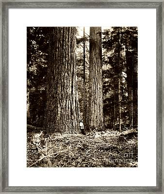 Pacific Old Growth Forest Framed Print