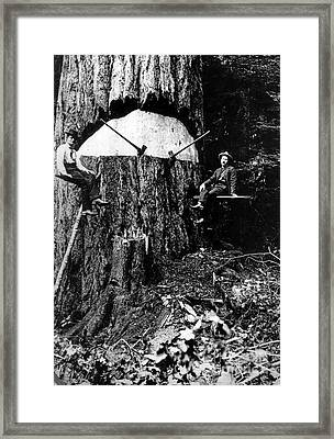 Pacific Old Growth Tree And Fallers Framed Print