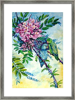 Pacific Parrotlets Framed Print