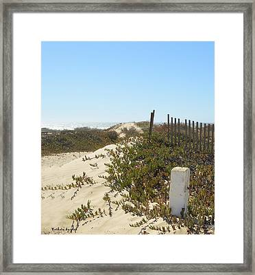 Pacific Pathway Framed Print