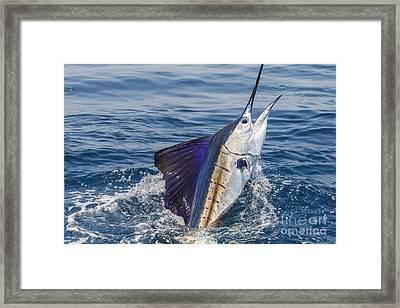 Pacific Sail Framed Print by Scott Kerrigan