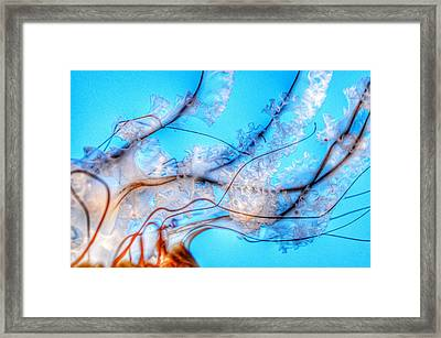 Pacific Sea Nettle Details Framed Print by Marianna Mills