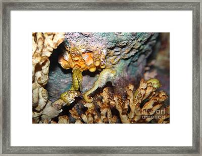 Pacific Seahorse 5d24977 Framed Print