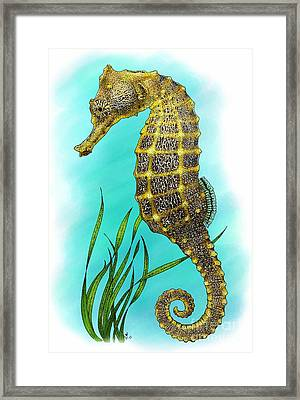 Pacific Seahorse Framed Print by Roger Hall