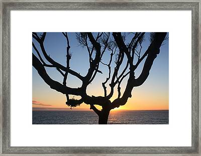 Pacific Tree Sunset Framed Print
