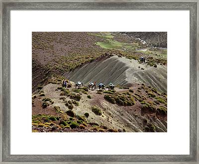 Pack Mules Framed Print by Cordelia Molloy