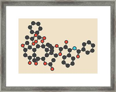 Paclitaxel Cancer Drug Molecule Framed Print