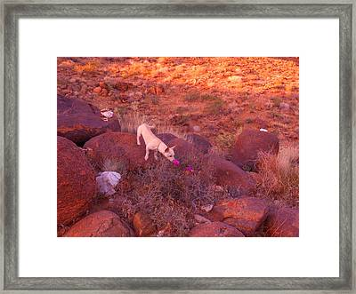 Paco Loves The Fragrance Framed Print by James Welch