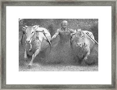 Pacu Jawi Framed Print by Star Ship