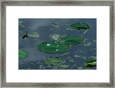 Pad Framed Print by Joe Scott