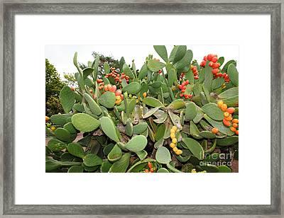 Paddle Cactus 5d25901 Framed Print