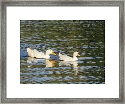 Paddling Together Framed Print by Sonali Gangane