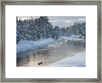 Paddling Up The Snowy River Framed Print