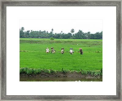 Paddy Field Workers Framed Print