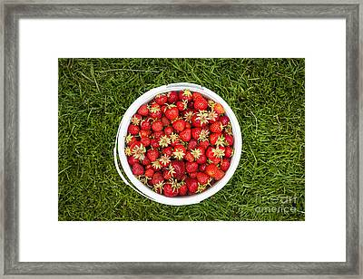 Pail Of Strawberries  Framed Print by Elena Elisseeva