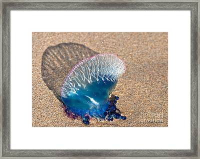 Painful Beauty Framed Print by Michelle Wiarda