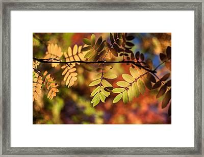 Paint  Framed Print by Aaron Aldrich