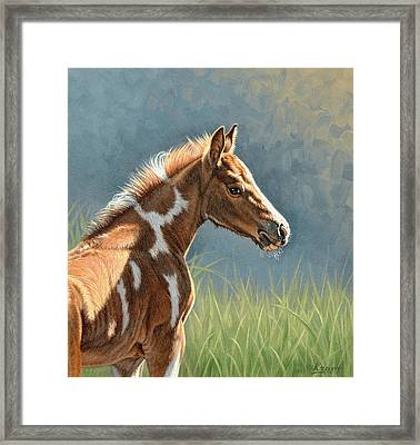 Paint Filly Framed Print by Paul Krapf