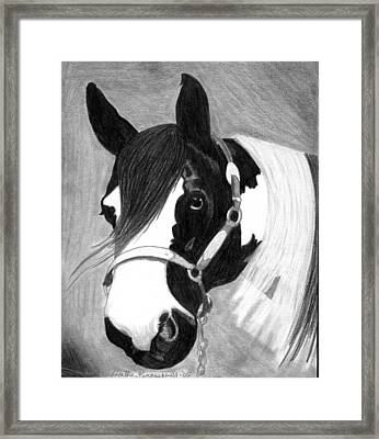 Paint Horse Framed Print by Olde Time  Mercantile
